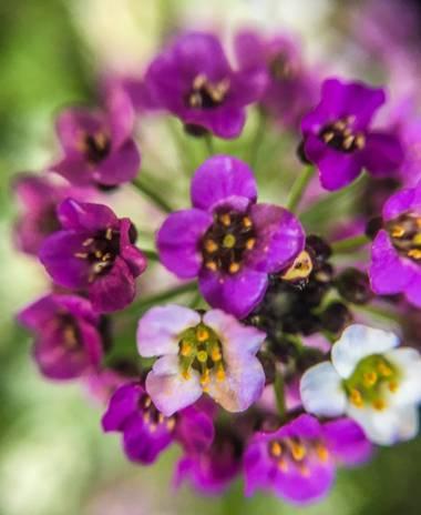 Jorgedlacasa en Hamelin: Flora  (Villalbilla)