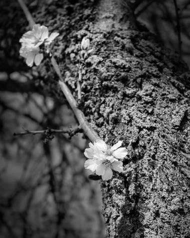 Piluki1982 en Hamelin: Flora  (Valdelaguna)