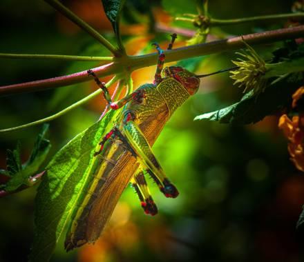 lucass.dosso en Hamelin: Fauna  (Eldorado)