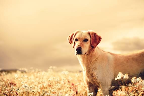 NachoCanalesfotografia en Hamelin: Fauna  (Estancia Las Violetas), Ella es Zoë #perro