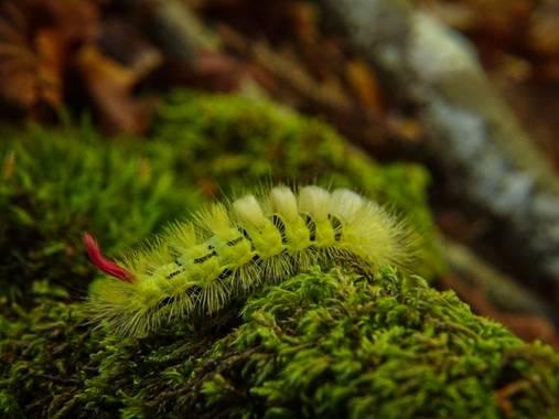 Eritz.cortazar en Hamelin: Fauna  (Zuia), Hace un año aproximadamente subía otra foto de esta misma especie a hamelin. El destino nos ha vuelto a unir😜 Es...