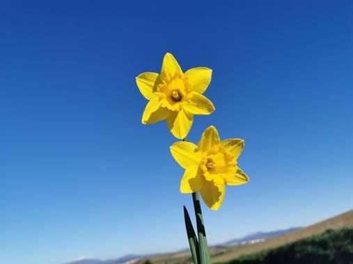 Irantzu_M en Hamelin: Flora  (Vitoria), #naturaleza