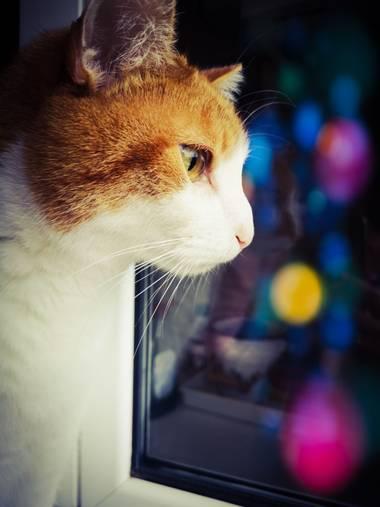 imagiaproducciones en Hamelin: Fauna  (Ponferrada), Felis catus Linnaeus, 1758, #gatocallejero #gatogris #gatohogareño #gatosdelmundo #gatocomuneuropeo #ga...