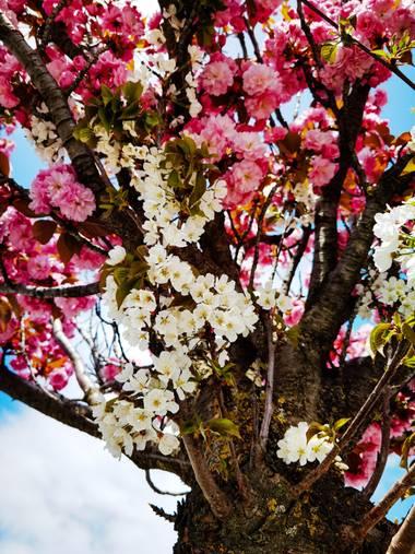 elizarivas en Hamelin: Flora  (Pamplona), #primavera