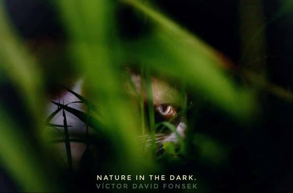 vicfonckph en Hamelin: Fauna  (Pereira), Nature in the dark. #gato #gatos #gatosdeinstagram #cat #lovecat #lovecats #cats #catsofinstagram #katze #katzen #...