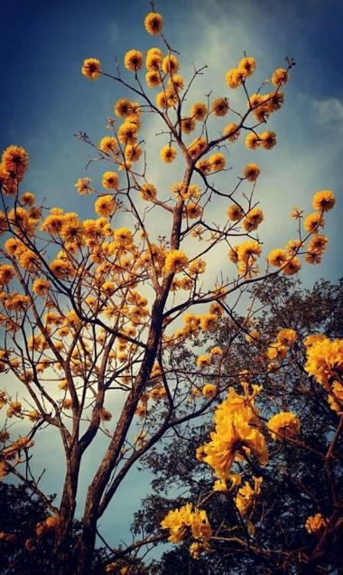 lywcava en Hamelin: Flora