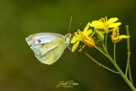Justi en Hamelin: Fauna  (Badalona), La rubia de ojos verdes !!!! #naturaleza
