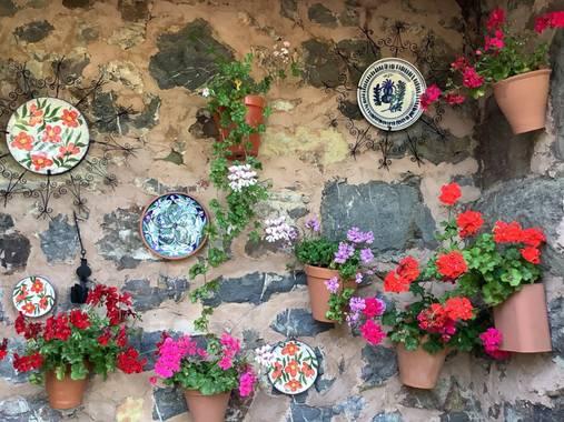 Manubarbecho en Hamelin: Flora  (Villafranca de Córdoba), #flora21