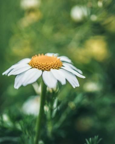 rqsalcedo en Hamelin: Flora  (Madrid), #flor