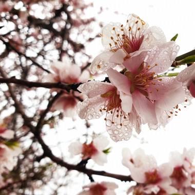 S.- en Hamelin: Flora  (Yátova), Me #encantan sus #flores  Me #encanta las #gotas de #lluvia Me #encanta mi #foto   #BuenosDías #Fotógrafa #Fotografía2021 ...