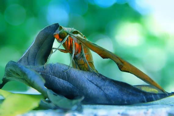 sujkp83 en Hamelin: Fauna, #otoño20 #faunavenezolana #mariposa