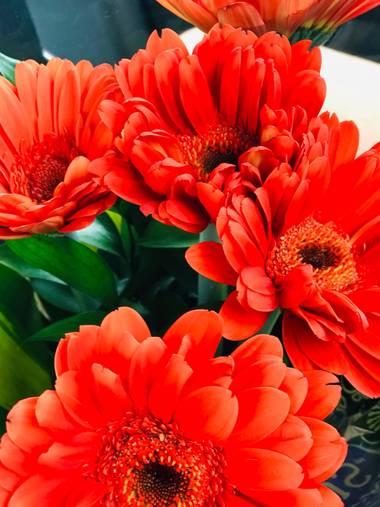 Josequinterolopez4 en Hamelin: Flora  (Armenia)
