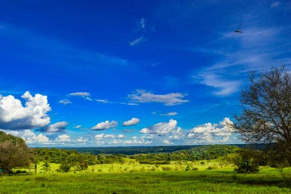 Camiloacca94 en Hamelin: Paisaje  (Vistahermosa), #sol #verde #arbol #paisajes #naturaleza #nature #biodiverdidad #biodiversidadcolombia #paisajescolombian...