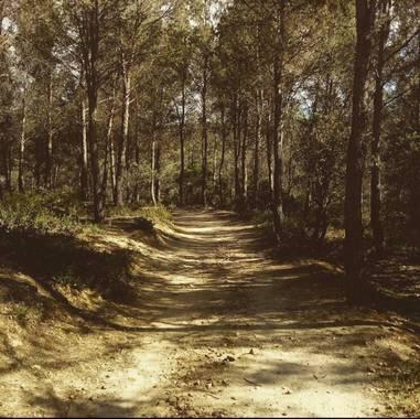 Fedilop en Hamelin: Paisaje  (Arganda del Rey)