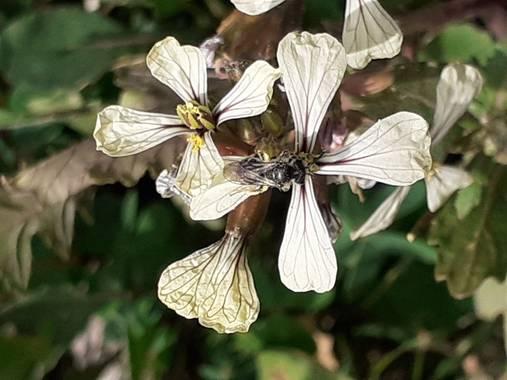 KDias en Hamelin: Flora, 🙂
