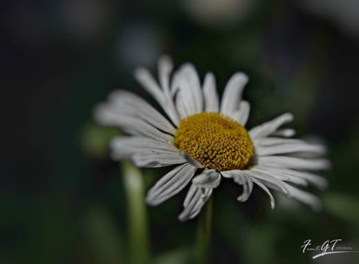 Frankgt48 en Hamelin: Flora  (El Molar), #flora21
