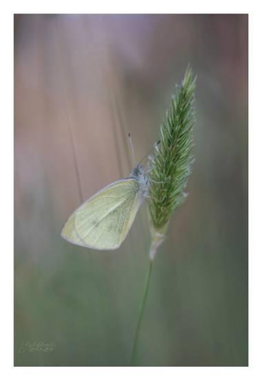 Antonio.rsoto.66 en Hamelin: Fauna  (Hinojos), #flora21