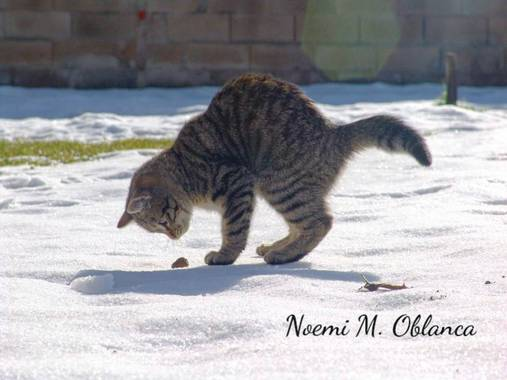 Noemi en Hamelin: Fauna, Sepuede comer....mmmm....???? #gato #cat #nieve