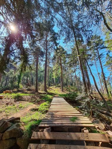 Marijohz en Hamelin: Paisaje  (Ezcaray), Al bosque...
