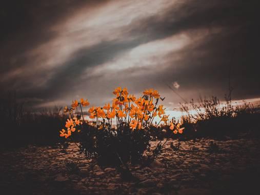 Octavio-amat en Hamelin: Flora  (Petrer), #flora21