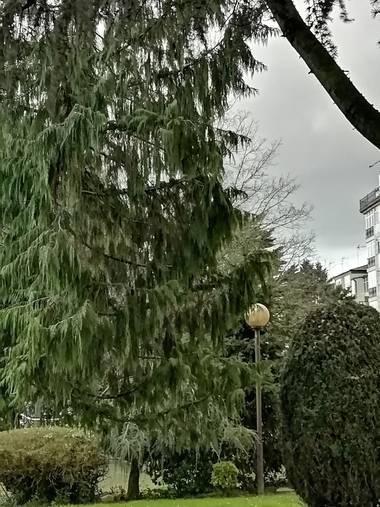 Susandresro en Hamelin: Flora  (Lugo), Parque Frigsa