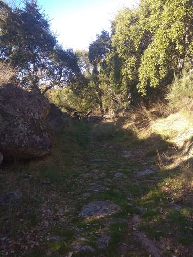 Jositocerro en Hamelin: Paisaje  (Valencia de Alcántara)