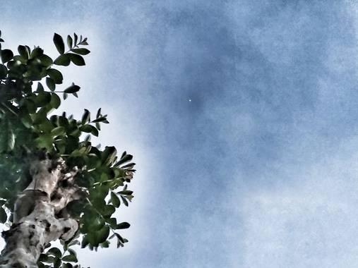 matiasrivilli en Hamelin: Flora, Esa fusión entre el #arbol y el #cielo, la tierra y el universo