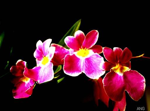 Anunezgallego en Hamelin: Flora  (La Ceja), #anunezgallego #balconescalera #laceja #colombia