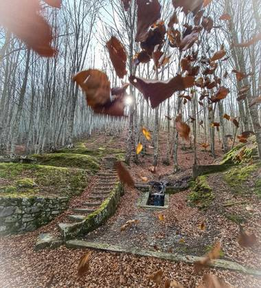 Marijohz en Hamelin: Paisaje  (Ezcaray), Disfrutando del bosque de hayedos