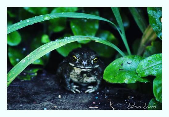 silviosarco en Hamelin: Fauna  (Los Toldos)