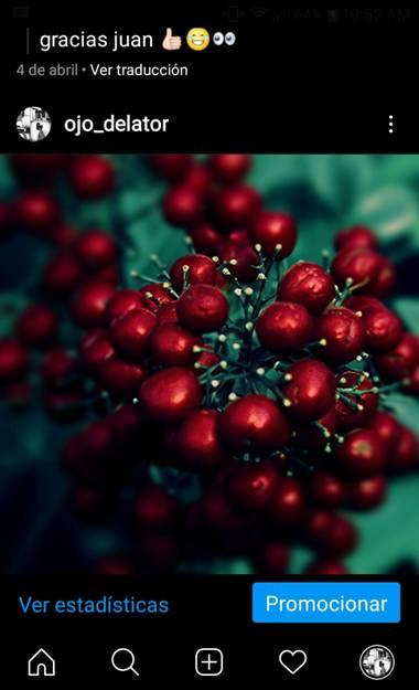 Nat en Hamelin: Flora, #frutosrojos #rojos #naturalezaargentina