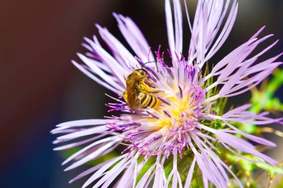 ralphlagarillo en Hamelin: Flora  (Spain), Polinizacion
