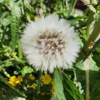 Safari.faby en Hamelin: Flora, #flor #madrid #hamelin
