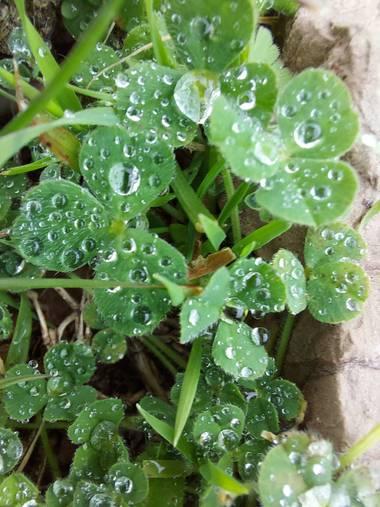 Apasnau75 en Hamelin: Flora  (Cortes de la Frontera), Justo en el Mirador del Cañón de las Buitreras encontramos plantas, musgos y flora diminuta y precios...