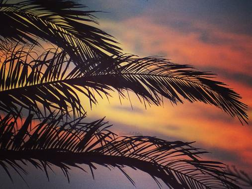 Maribel en Hamelin: Flora  (Moguer), #mazagón #palmeras #miparaiso