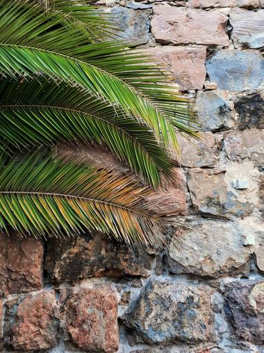 Cromatica.urbana en Hamelin: Flora  (Barcelona), #flora #floranativa #florayfauna #floramediterranea #paisajes #parquesyjardines #castelldemontjuic #castil...