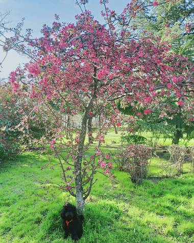 Lasonymegamas en Hamelin: Flora  (Madrid), Árbol en flor