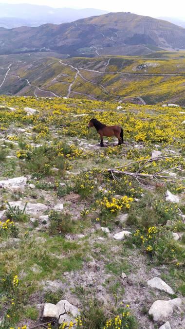 David en Hamelin: Fauna  (A Cañiza), #paisaje