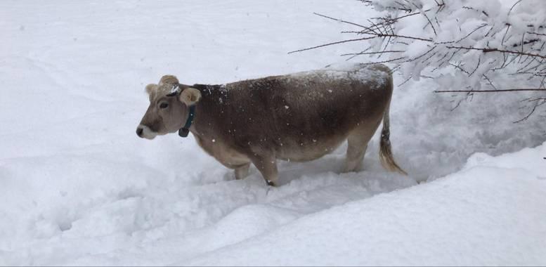 Enamorats_de_sellent en Hamelin: Fauna  (Coll de Nargó), La Filomena de Cal Tomas #invierno20
