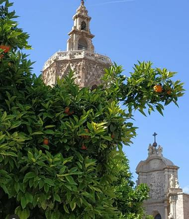 Maite  en Hamelin: Flora  (València), #ParquesyJardines