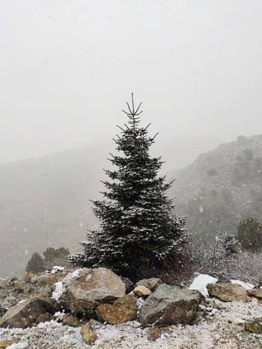 Sararp14 en Hamelin: Paisaje  (Ronda), #invierno20