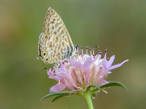 Eritz.cortazar en Hamelin: Fauna  (Cambrils), Gris estriada 🦋 . . . #gris #estriada #mariposa #butterfly #insect #florayfauna_es #hamelin #nature #bio #bi...