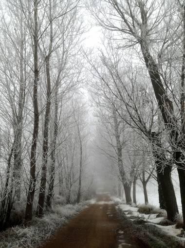 Maite1059 en Hamelin: Paisaje  (Corcos), #invierno2020  #cencellada