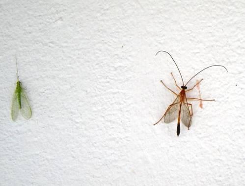 KDias en Hamelin: Fauna, Bichos en en campo. Bahia. Brasil.