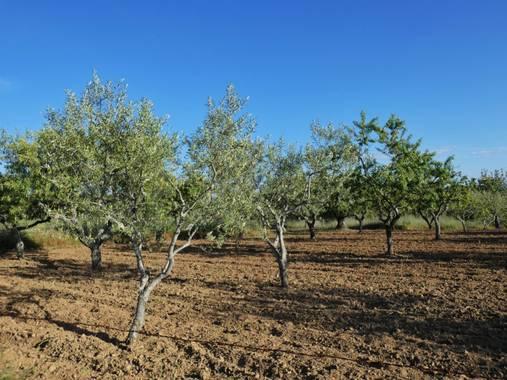 mariale en Hamelin: Flora, 📸 #marialemdza  Provincia de Zamora, primavera 2021.