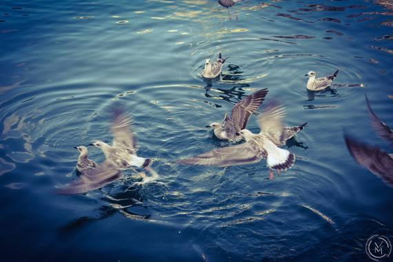 Conbyconv en Hamelin: Fauna  (Cudillero), #Ave21