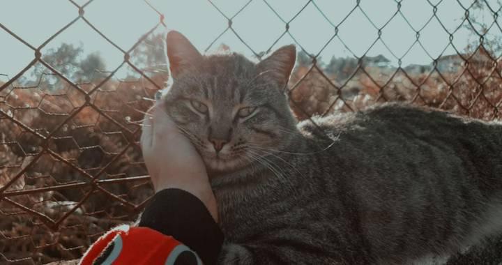 jelenvolta en Hamelin: Fauna, #gato gatoconsentido #otoño #ďíasdeotoño #animalesrescatados #otoño#ďíasdeotoño #animalesfelices