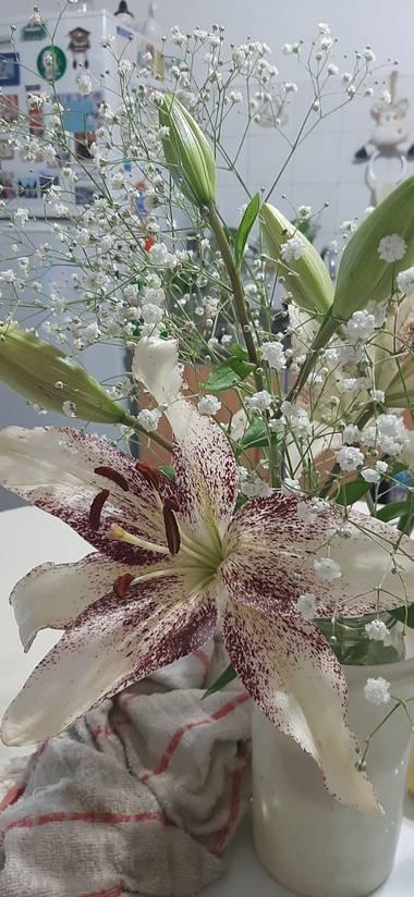 Yami2132 en Hamelin: Flora  (Lomas de Zamora), .