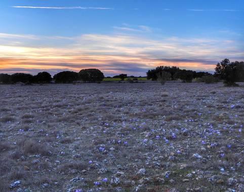 Rafaelcastillo59 en Hamelin: Paisaje  (Povedilla), Atardecer en la Loma del Aire, en primer término lirios silvestres