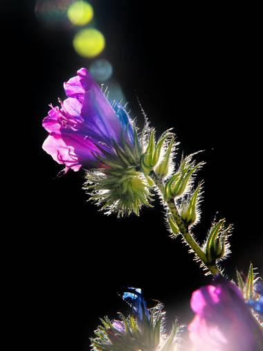 Capturolavida en Hamelin: Flora  (Huelva), #flores #nature #naturaleza